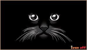 negru.png